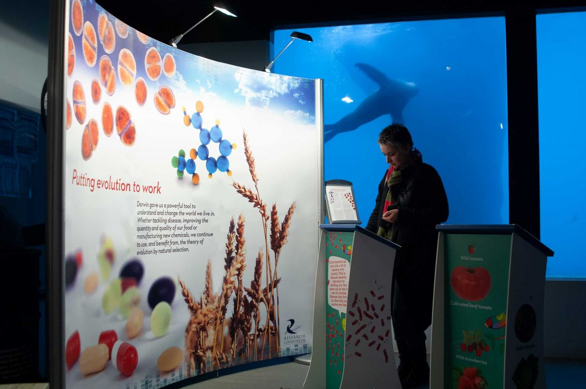 Darwin Today - Science Exhibition - Display Graphics