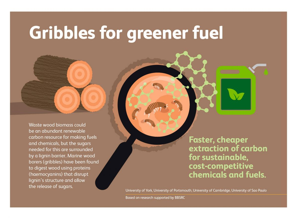 BBSRC & UKRI - Industrial Bioscience - Creating Bio-Fuel From Wood using Gribbles